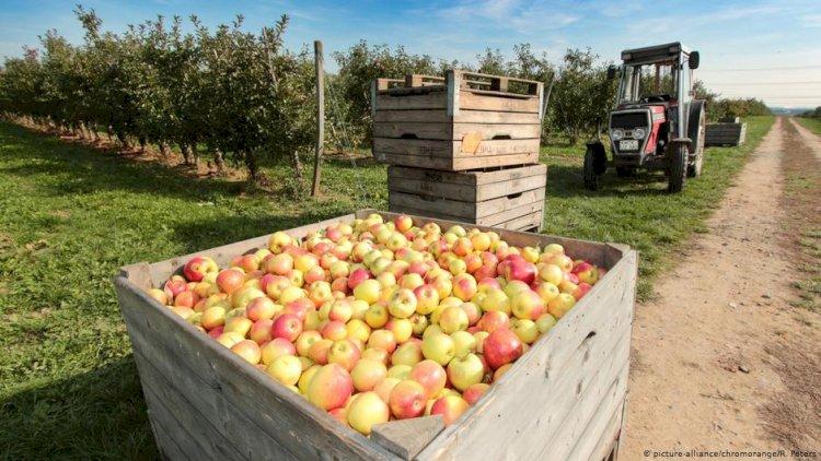 AB gıda üretiminde ekolojik dönüşüme hazırlanıyor