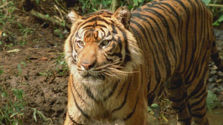 Ekvator'un Vahşi Sırları National Geographic WILD Ekranlarında
