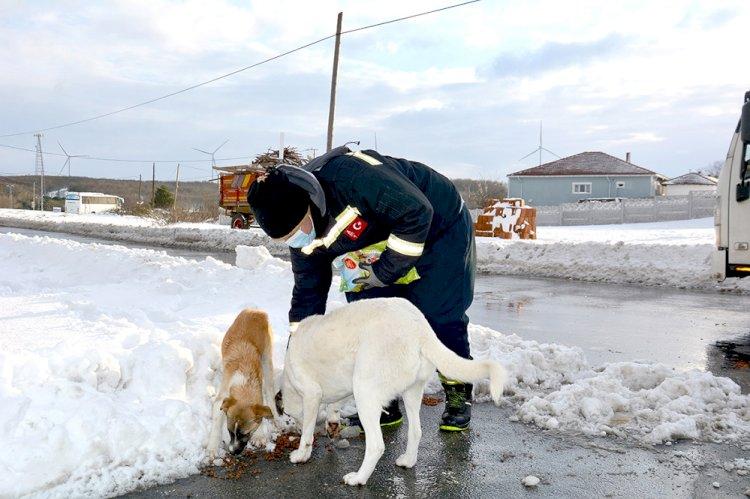 Karda yiyecek bulmakta zorlanan sokak hayvanlarına BEDAŞ ekiplerinden mama