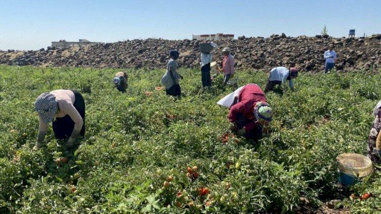 Çiftçi sayısındaki yıllık düşüş 300 bini bulabilir